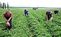 Aprobado el Proyecto de Ley de Titularidad Compartida de las explotaciones agrarias