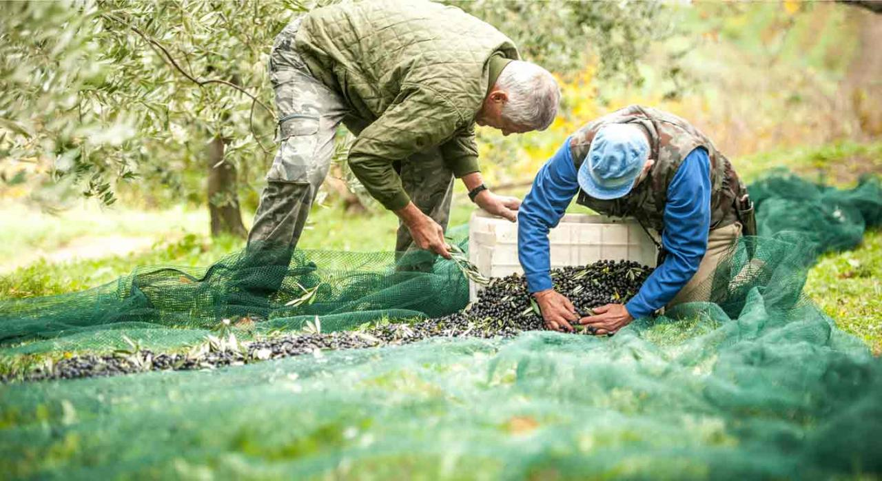 empleo sector agrario