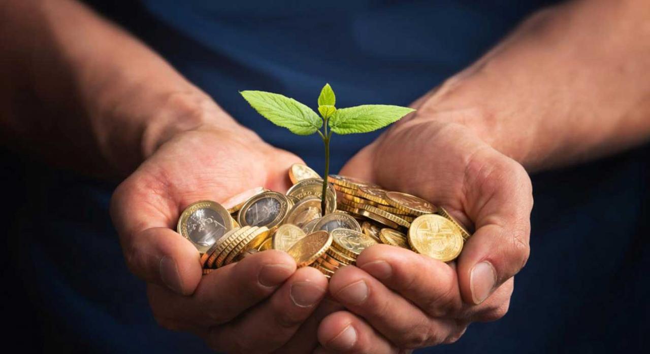 Ayudas autónomos. Imagen de unas manos sosteniendo una planta con monedas