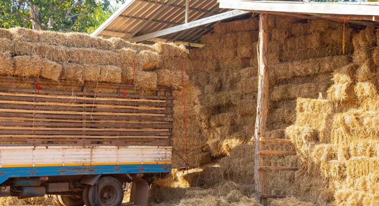 Accidente de trabajo; recargo de prestaciones; cosa juzgada; sanciones administrativas. Camión, en un granero, cargado con fardos de paja