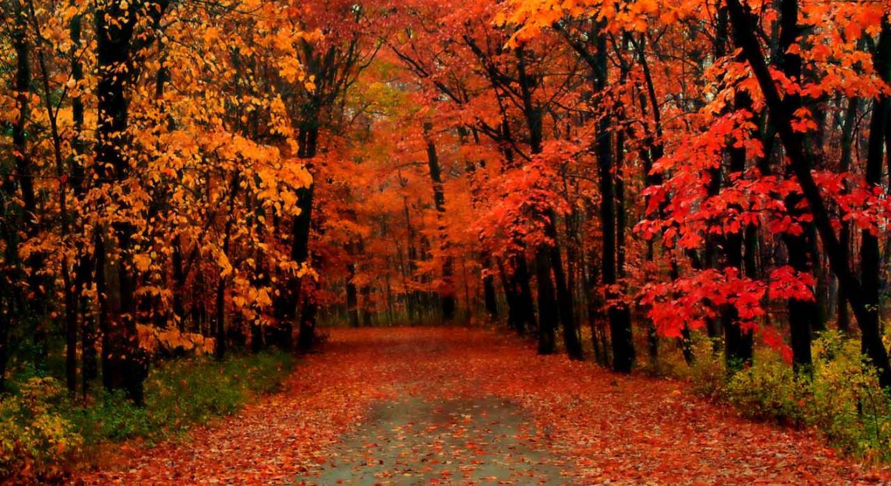 Normativa de las comunidades autónomas; ayudas y subvenciones. Camino entre árboles cubierto de hojas en otoño