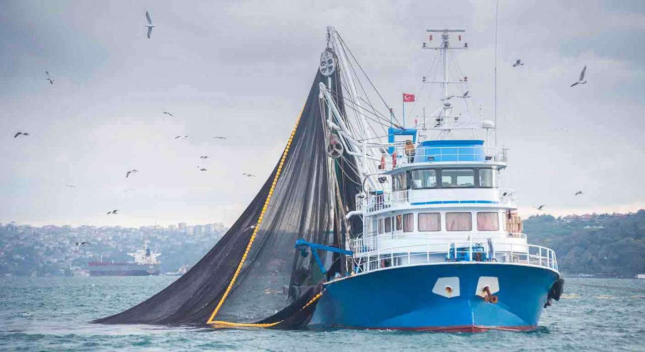 ector marítimo-pesquero. Nueva actualización de la prórroga de determinados certificados. Imagen de un barco en alta mar