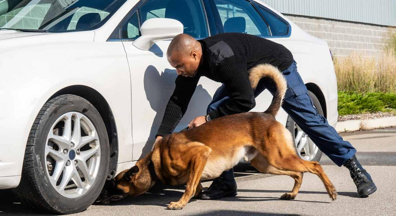 Se trataba de una medida justificada, idónea, necesaria y proporcionada al fin perseguido. Profesional de seguridad con un perro mirando debajo de un coche
